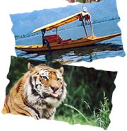 Kashmir Houseboat Packages Wildlife Travel India