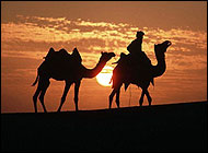 Camel Safaris Jaisalmer Travel Vacations
